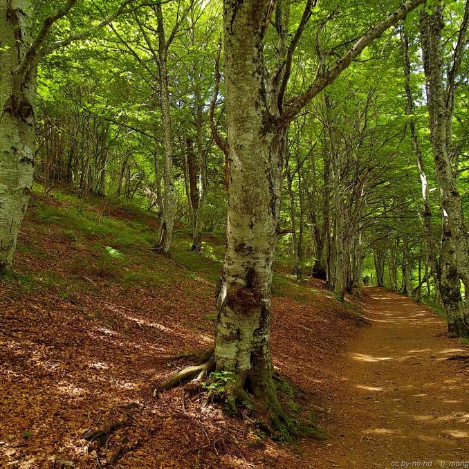 Forêt (Copier)